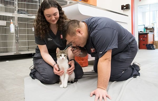 Emergency Animal Hospital in Union: Emergency Veterinarians Examine Cat
